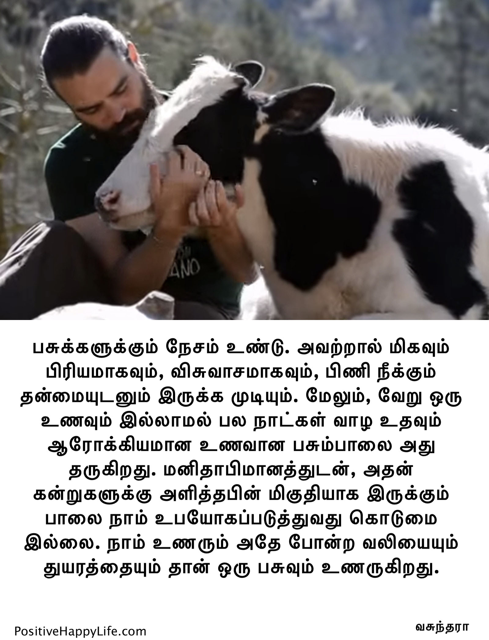 Cows can love too t